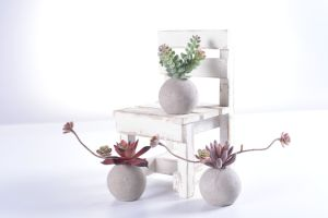 Flocking Ladder Succulent in Round Cement Pot pictures & photos