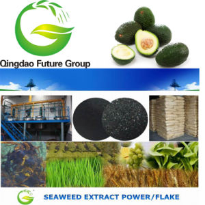 Quick Release Fertilizer Alga /Kelp/Seaweed Extract Flake &Powder pictures & photos