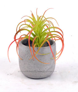 Artificial Succulent Plants in Cement Pot for Home Decoration pictures & photos