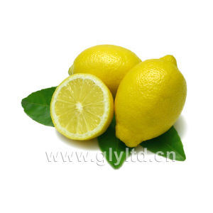 Chinese Supplier for Fresh Lemon/Lime pictures & photos
