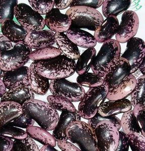 Black Speckled Kidney Beans
