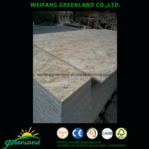 Poplar Wood Packing Grade OSB (oriented stand board) Board pictures & photos