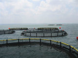Culture Farming Deep SAE Anti-Fouling Fishing Net Cage pictures & photos