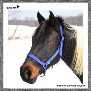 Equine Supplies Plain Nylon Horse Halter pictures & photos