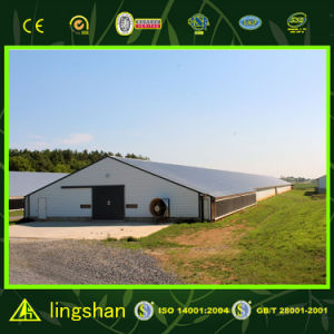 Economic Steel Frame Poultry House pictures & photos