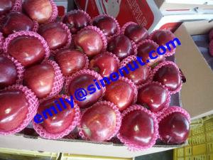Apple Fruit Huaniu pictures & photos