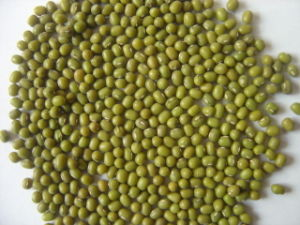Crop High Quaity Green Mung Bean pictures & photos