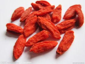 Sale China Goji Berry