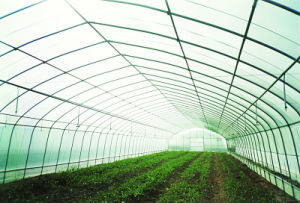 Tunnel Aluminum Sunlight Greenhouse pictures & photos
