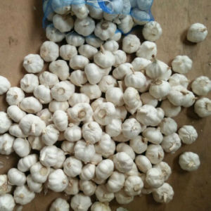 Pure White Garlic in 10kg Mesh Bag pictures & photos