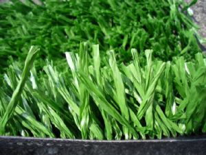 Popular Artificial Garden Grass in European Market (Classic Fb)