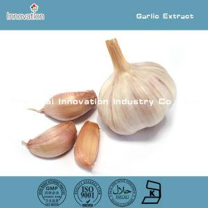 100% Natural Garlic Extract Powder 0.5%, 2%, 1% Allicin (HPLC)
