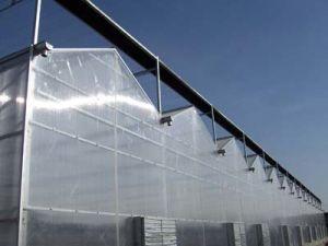 Plastic Film Greenhouse for Mushroom pictures & photos