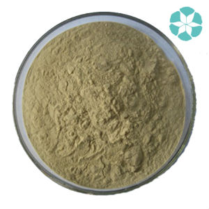 Alfalfa Extract / Medicago Sativa Extract pictures & photos