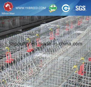 PVC Feeder Trough Broiler Coop / Cage to Nigeria/Zambia Farm pictures & photos