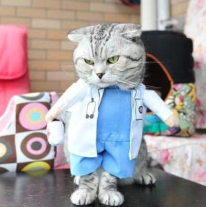 Doctor Design Cat and Dog Costume Pet Clothing pictures & photos