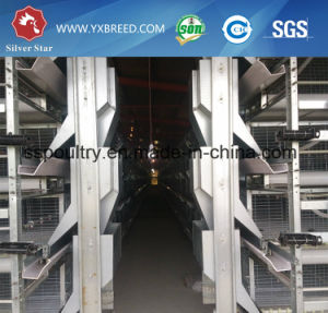 Automatic H Type Chicken Cage Control Shed Equipment pictures & photos