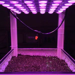 Automatic LED Grow Light Module for Flowering and Ripening pictures & photos