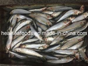 Good Quality Frozen Sardines 20-30PCS/Kg pictures & photos