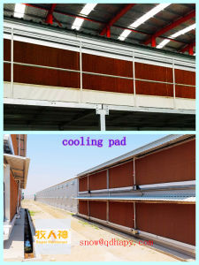 Poultry Equipment in Livestock with Prefab House Construction in High Quality pictures & photos
