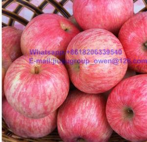 Top Quality Yantai Origin New Crop FUJI Apple pictures & photos