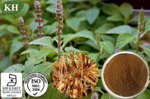 Coleus Forskohlii Extract: 8%, 20% Forskolin pictures & photos
