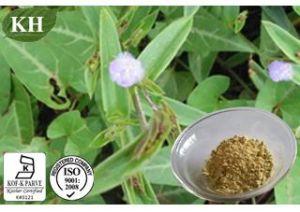 Pure Beta Ecdysterone 50%-98% CAS No: 5289-74-7 pictures & photos