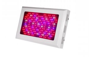 168X3w 85-265V Red: Blue=8: 1 LED Grow Light pictures & photos