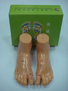 19cm Foot Model for Massage pictures & photos