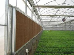 Vegetable Planting Greenhouse PC Sheet Green House pictures & photos