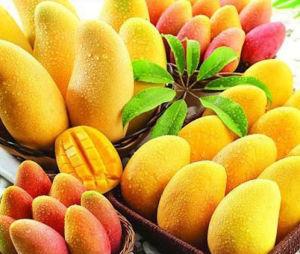 DIY E Liquid Fruit Flavor Concentrate TUV Accredited OEM & ODM Electric Cigarette E Juice E Liquid pictures & photos