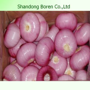 Supply The Best Quality Fresh Onion