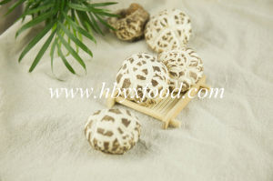 Dried Food White Flower Mushroom pictures & photos