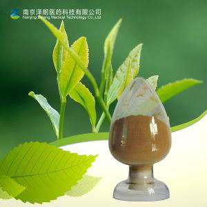 Green Tea Extract Tea Polyphenol 90% pictures & photos