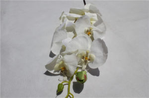 Home Decorating Artificial Flower Orchid Fake Phalaenopsis pictures & photos