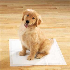 Dry and Soft Pet Puppy Pad pictures & photos