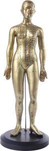 Female 48cm Acupuncture Model