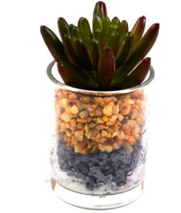 Artificial Kinds of Succulent in Glass Vase with Stone for Decoration in Home&Office pictures & photos