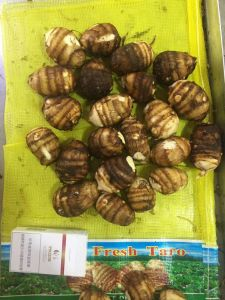 Provide Fresh Taro with Competitive Price pictures & photos