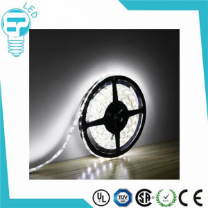 SMD 3528 DC12V IP67 Flexible LED Strip with CE RoHS Certification pictures & photos