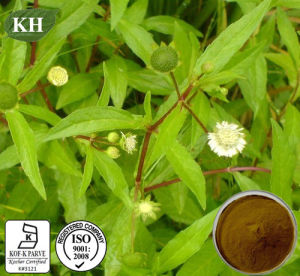 Eclipta Alba Extract: Wedelolactone 2%, 4.5% by HPLC pictures & photos