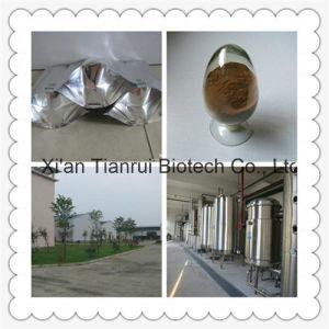 Green Tea Extract/Green Tea Powder pictures & photos