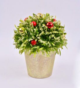 Charming Rosemary Ball Plants with Red Berry in Paper Mache Pot pictures & photos