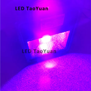 UV Curing Lamp 365nm 50W pictures & photos
