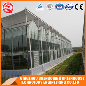 China Prefabricated Venlo Tempered Glass Greenhouse pictures & photos