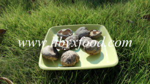 Dried Vegetable Facial Smooth Shiitake Mushroom Spawn pictures & photos