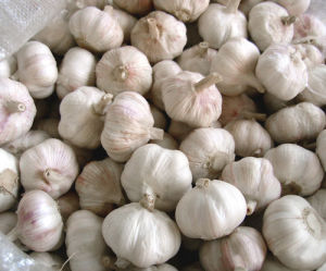 Crop 2017 Fresh Garlic From China pictures & photos