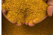 Corn Gluten Meal 60% Feed Additive pictures & photos