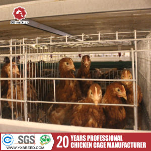 Strongest Chicken Cage Poultry Equipment for Hot Sale pictures & photos