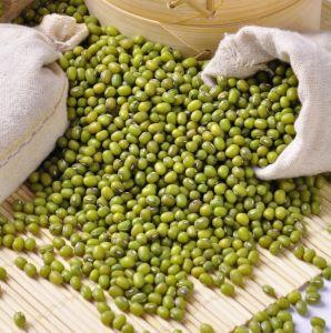 Hot Sale China Organic Green Mung Bean